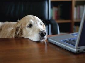 13-cane-in-ufficio-anteprima-600x399-616668
